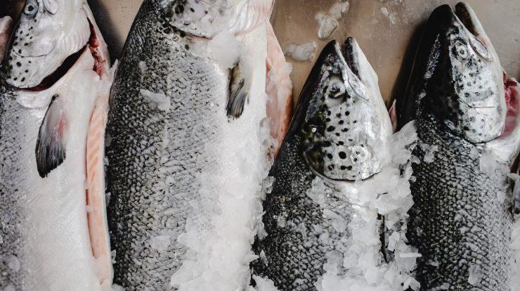 konserve balık nasıl yapılır